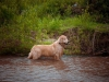 dog-river-blues_0