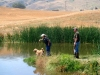 golden-retriever-hunt-test-training5