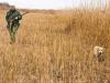 Охота с ретривером по фазану