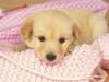 lovely_puppy_wallpaper_da237071e_wallcoo-com_