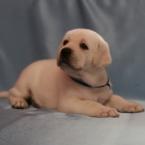 puppyindex0004