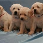 puppyindex0018