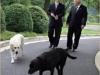 Ричард Брюс «Дик» Чейни    46-й вице-президент США