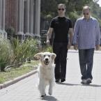 Дмитрий Медведев и Владимир Путин (резиденции \'Бочаров ручей\'. Золотистый ретривер Альдо - питомец Медведева