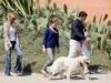 Мелани Гриффитс и Антонио Бандерас с дочерью и любимым ретривером
