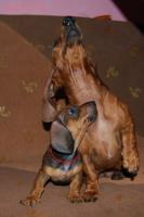 дрессировка и хендлинг собак всех пород